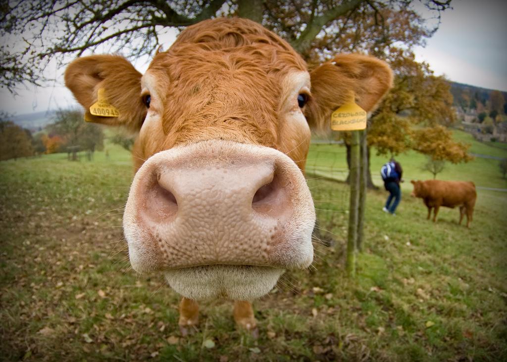Vas Biznis Je Krava